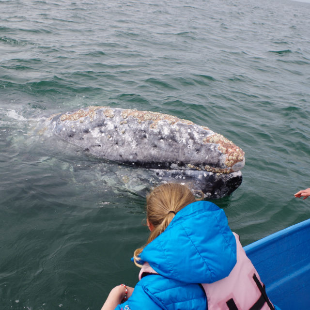 Ever Touched a Whale?